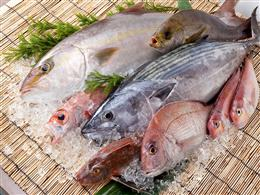 五島列島直送の鮮魚がずらり!