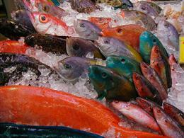 毎日新鮮鮮魚が入荷♪