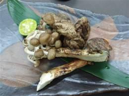 松茸と旬の木の子の炙り