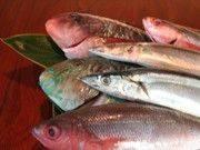 旬の魚介が盛りだくさん! 素材の鮮度にとことんこだわったメニュー