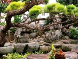 目を奪われる美しい景観の庭