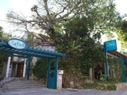 大きながじゅまるの木が寄添う入口