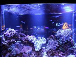 小さなプライベート水族館