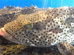 生け簀の新鮮な魚