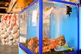 生け簀の活魚