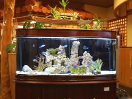 八重山の熱帯魚が迎えてくれる