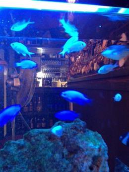 熱帯魚を見ながらお食事が楽しめます♪